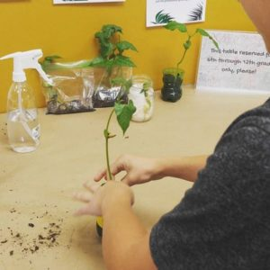 A teen carefully packing a plant into soil.