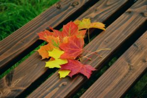 Leaves on a bench.